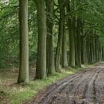 blog bomen