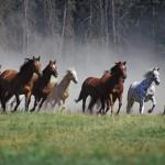 blog paard